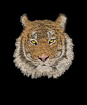 Tiger, Cat, Animal, Leopard, Cougar, Cub, Tigress, Lion