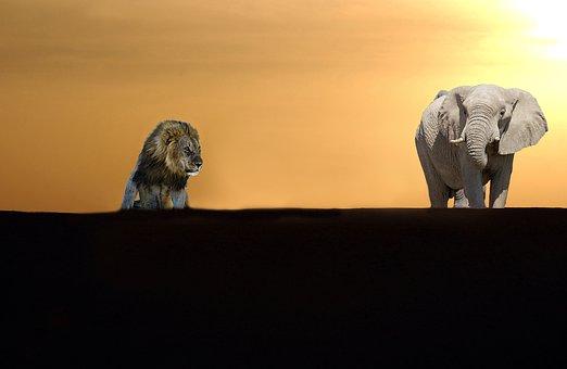 Lion, Elephant, Photoshop, Manipulation, Animal, Sunset