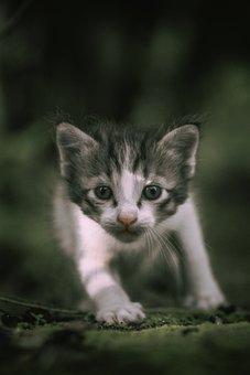 Cat, Kitten, Kitty, Kittens, Pet, Pets, Animal