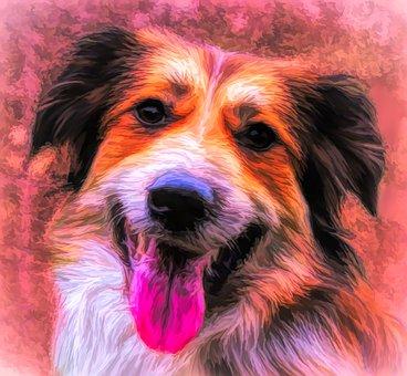 Art, Photo Art, Painting, Dog, Collie, Border Collie