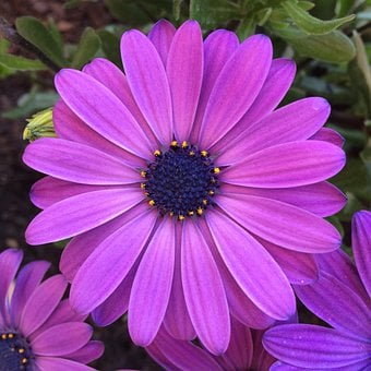 Flowers, San Isidro, San Jordi, Colorful, Lilac