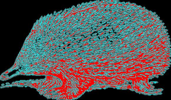 Echidna, Hedgehog, Hedge-hog, Mammal, Spiny, Spiky