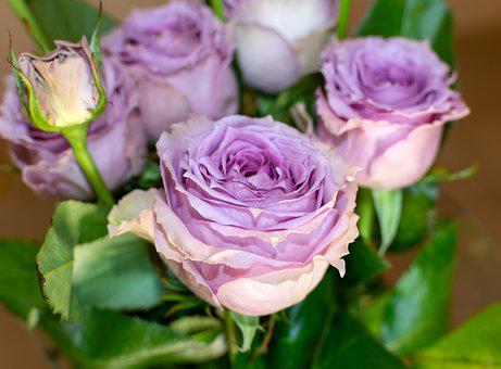 Roses, Bouquet, Flowers, Gift, Romantic, Pink, Lilac