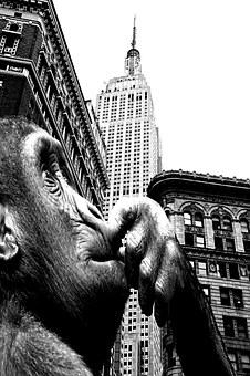 Ape, Building, King Kong, Monkey, Primate, Face