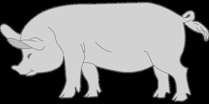 Pig, Animal, Tail, Curly, Gray, Barn, Farm