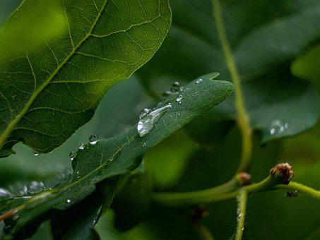 Sheet, Tree, Water, Drop, Green, Background, Flora