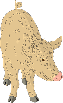 Barn, Pig, Animal, Tail, Hairy, Curly