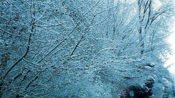 Aesthetic, Snow, Winter, Nature, Tree, Winter Forest