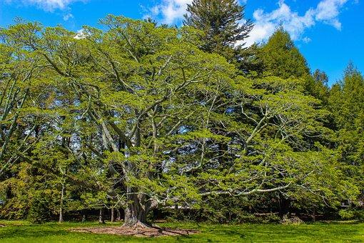 Tree, Arboretum, Nature, Landscape, Park, Garden