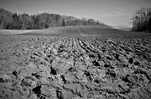 Landscape, Agriculture, Arable Land, Arable, Field