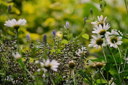 Jule-de-cule, Background, Photography, Plant, Nature