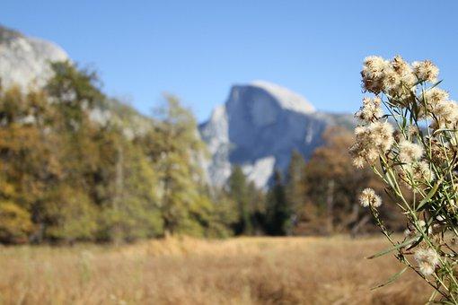 Mountain, Field, Landscape, Mountains, Yosemite
