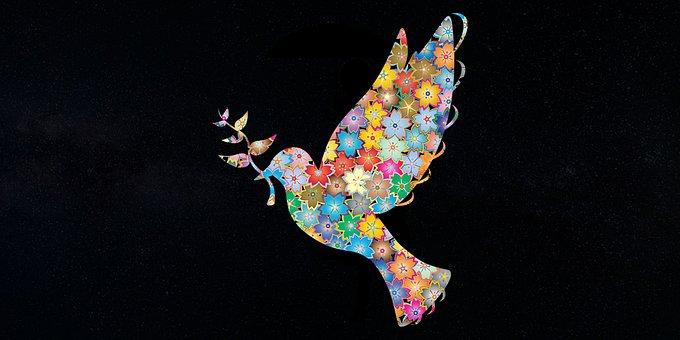 Bird, Peace, Flower, Florist, Nature, Animal, Parrot