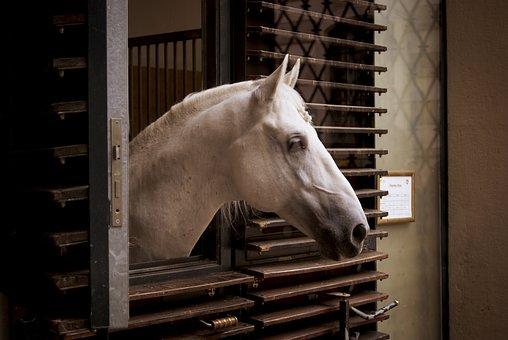 Horse, Animal, Austria, Animals, Horses