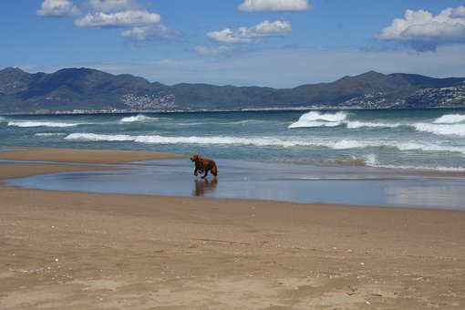 Beach, Sea, St Pere De Pescador, Spain, Dog On Beach