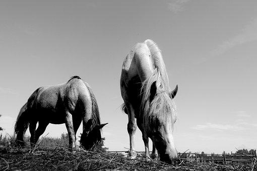 Horses, Pasha, Farm, Ranch, Horse, Riding, Freedom