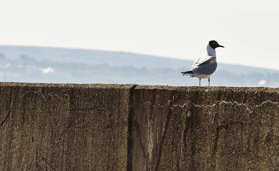Sea View, Seagull, Sea Birds, Seagull Sitting