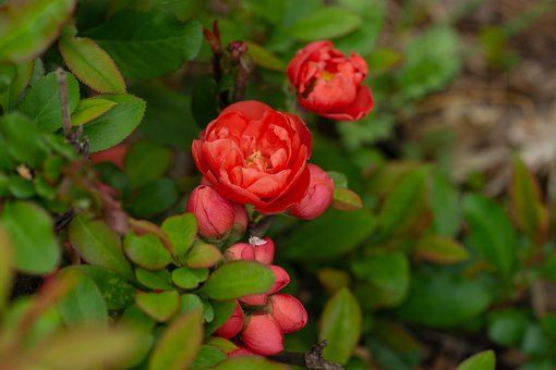A Master Flower, Red, Spring, Nature, Blossom, Colorful