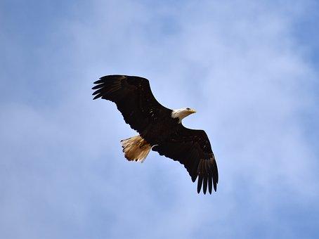 Eagle, Mobile Bay, Alabama, Bird, Blue Mobile