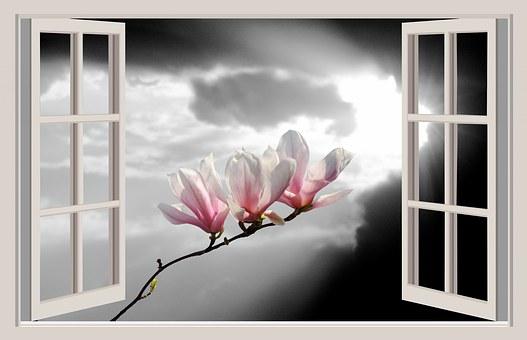 Magnolia, Flower, Spring, Blossom, Bloom, Aesthetics