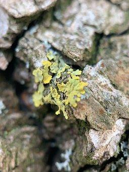 Macro, Moss, Green, Flower, Forest, Tree