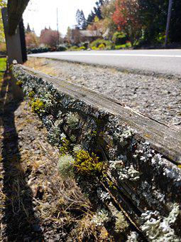 Moss, Wood, Fence, Ants, Day, Street, Old, Nature, Log