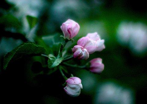 Spring, Flowers, Bud, Color, Flower, Bloom, Flora