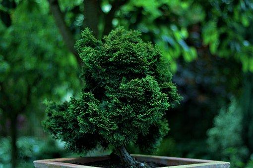 Garden, Plants, Spring, Close Up, Summer, Plant, Macro