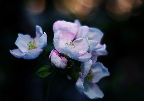 Spring, Flowers, Bud, Color, Flower