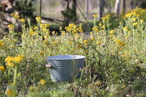 Flowers, Bucket, Spring, Yellow, Weeds, Nature, Summer