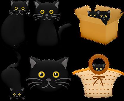 Halloween Black Cat, Cat In Box, Black Cat