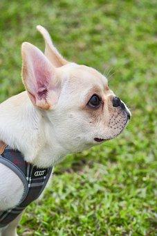 Wikiproject Taiwan, Taipei, Law Bucket, Dog, Grassland