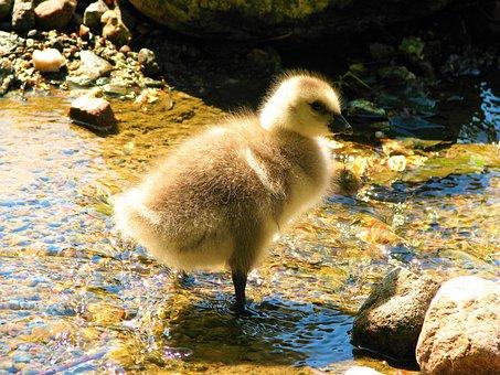Chick, Bird, Small, Cub, Nestling, Animal, Animals