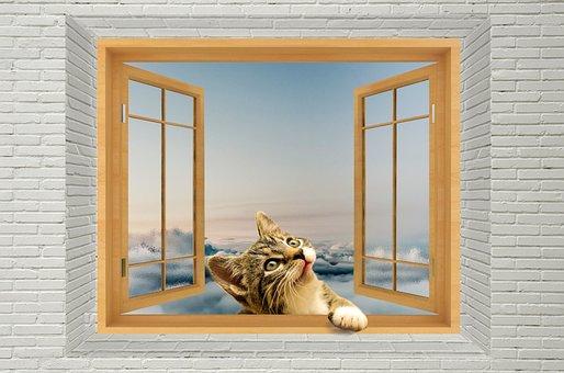 Cat, Window, Animal, Cute, Home