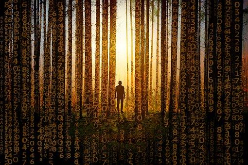 Matrix, Code, Coding, Trees, Dawn