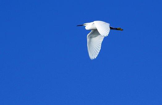 Bird, White Gru, Flight, Blue Sky, Elegance
