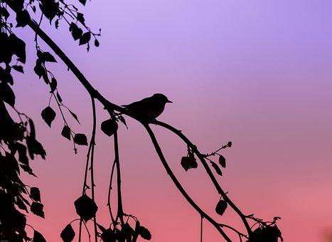 Tit, Crested Tit, Bird, Songbird, Abendstimmung, Animal