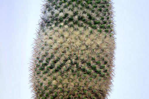 Cactus, Spikes, Down, Layer, Light Background, Needles