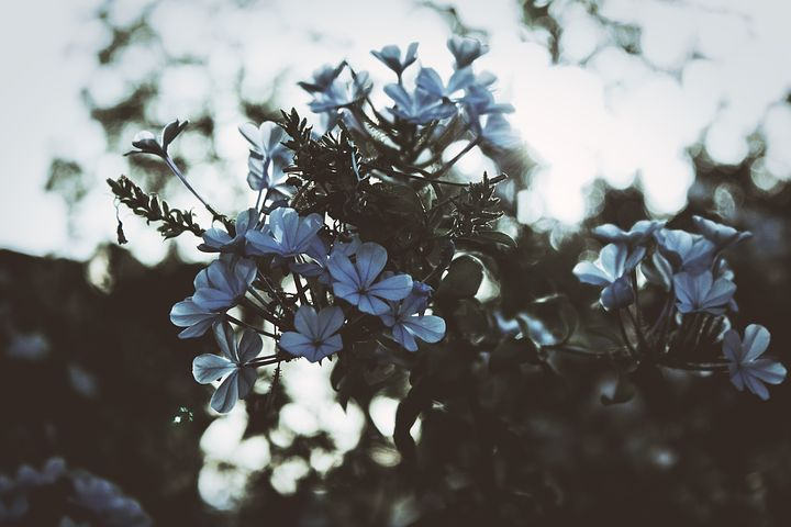 Flowers, Floral, Bloom, Blossom, Nature, Earth, Spring