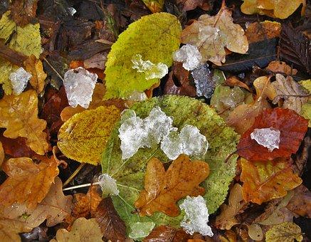 Fall Foliage, Eisbröckchen, Cold Season