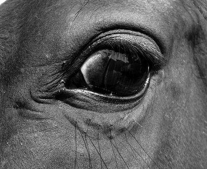 Eye, Horse, Close Up, œil, Eyelashes, Look, Horse Eye
