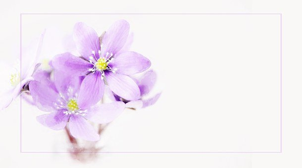 Painting, Hepatica, Flower, Pink, Flowers