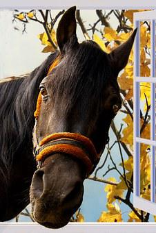 Horse, Window, Imposing, Window Frames, Neugirede