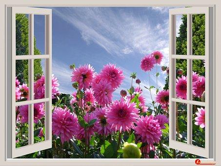 A Beautiful Day, Good Mood, Joy, Dahlias, Flowers