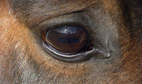 Horse, Eye, œil, Eyelashes, Look, Equine, Horse Eye