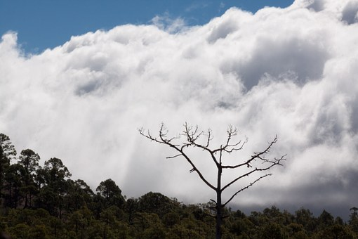 Tenerife, Teide, National Park, Clouds, Sky, Pine