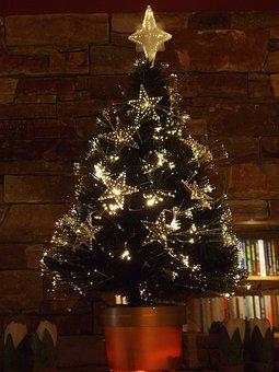 Christmas Tree, Sapling, Christmas, Tree