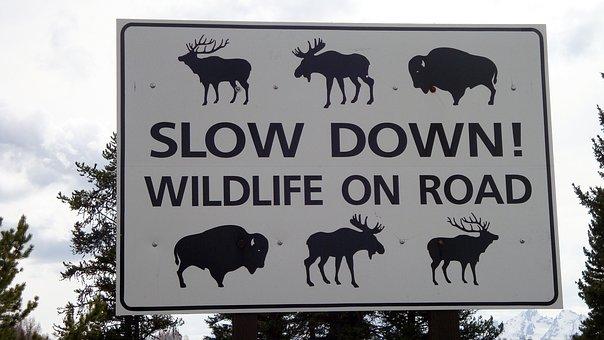 Warning, Warning Sign, Wild Animals, Animals, Beasts