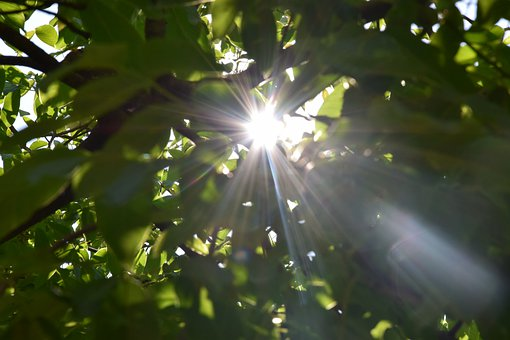 Nature, The Sun, Green, Walnut, The Rays