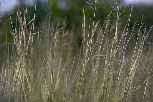 Dry Shrub, Reeds, Climate Change, Meadow, Pasture